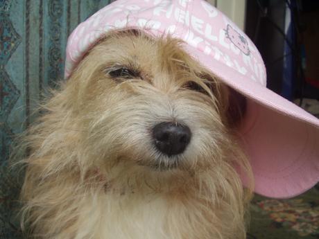 Cute picture of a dog sporting a baseball cap.