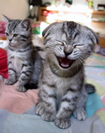 This kitty is just plain happy.