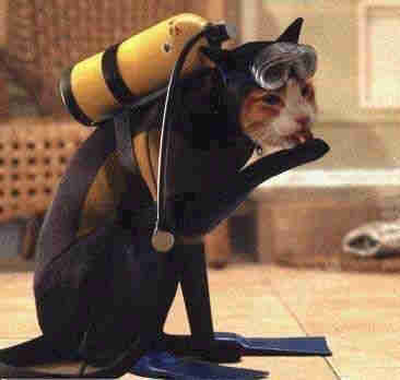 Cat diver all suited up in diving gear.