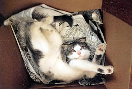 Cute photo of a flexible cat.