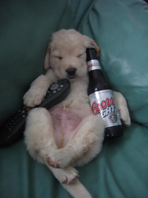 Lazy dog is just sitting, watching tv and drinking beer.