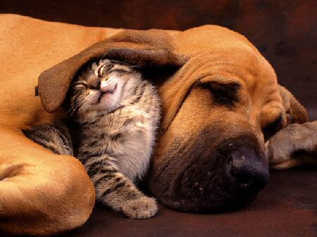 Cutest picture of a kitty cuddling a dog.