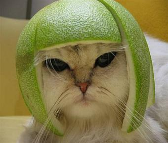 Fruit hat fits this cat just nicely.