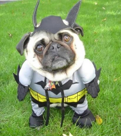 Batman turns into a pug face.