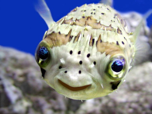 A cute picture of a smiling little fish.
