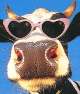 Cool sunglasses for cows.