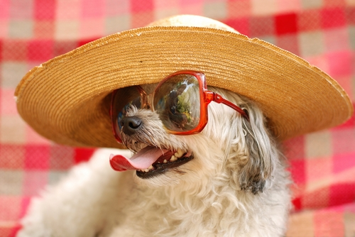 Picture of funny dog with sunglasses and hat.