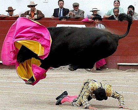 Real bull fighting action.