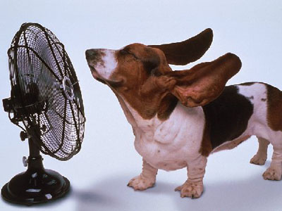 Dog enjoys a fan breeze.